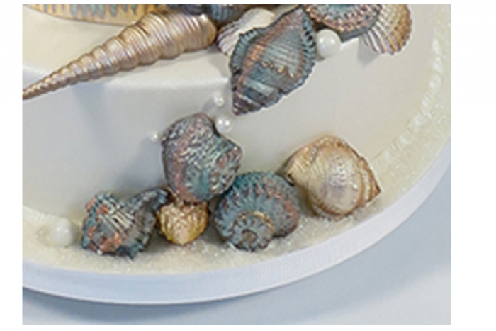 Sugar Snail Sea Life Mould by Marvelous Molds