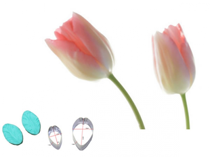 Tulip Cutter and Veiner Set